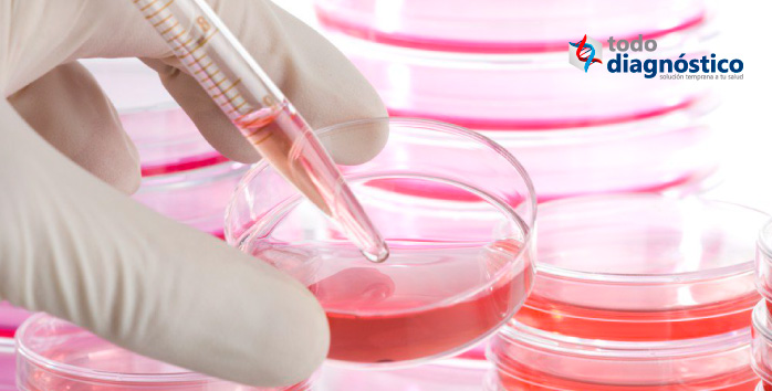 Diagnóstico de la influenza: cultivo celular