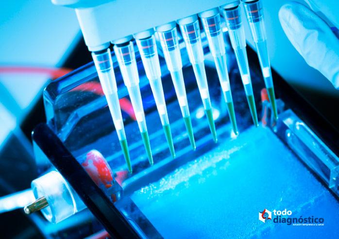Diagnóstico molecular: electroforesis en gel