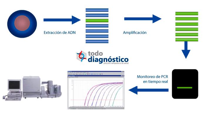 Procedimiento PCR en tiempo real