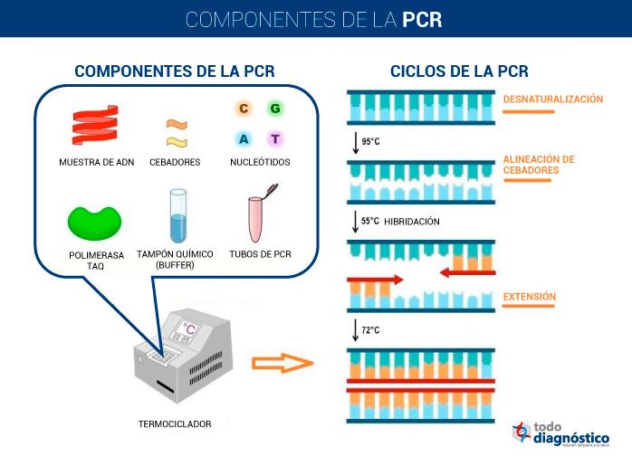 Componentes de la PCR y pasos para la realización de la PCR