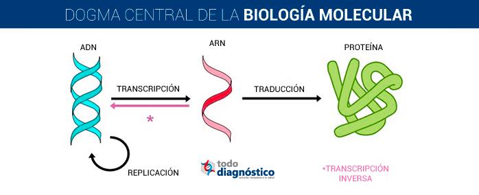 Ilustración del dogma central de la biología molecular