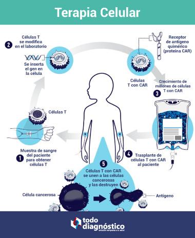 Terapia celular y células T CAR