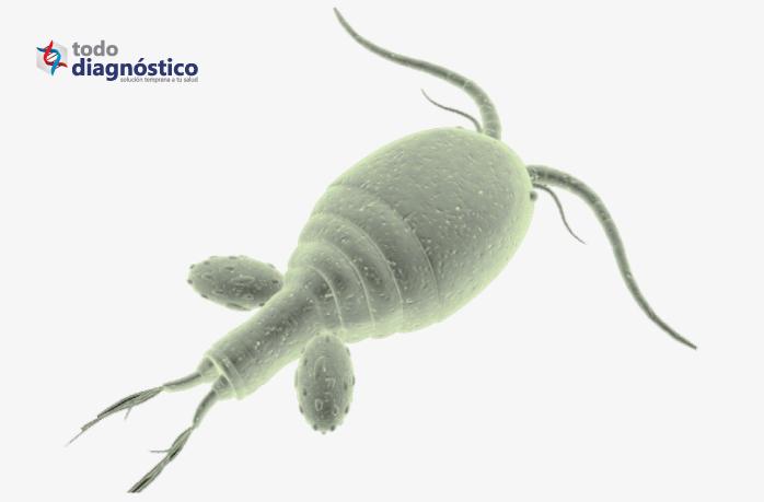 Parásito causante de infección y enfermedad gastrointestinal