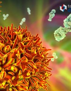 Memoria inmunológica inmunidad adquirida y vacunación: Todo Diagnóstico